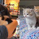 แมวจรดีใจสุดๆ ที่ได้รับการช่วยเหลือ มันจึงเซอร์ไพรส์ด้วยการคลอดมิ้วผู้น่ารัก 3 ตัว