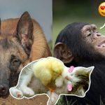 18 ภาพของเพื่อนรักต่างสายพันธุ์ที่พิสูจน์ให้เห็นว่า ความแตกต่างไม่ได้มีผลต่อมิตรภาพ