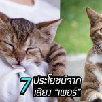 """รู้หรือไม่ เสียง """"เพอร์"""" ของเจ้าแมวส่งผลดีกับมนุษย์ และนี่คือ 7 ประโยชน์จากมัน!!"""