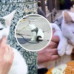 ชายไร้บ้านดูแลแมวใกล้ตาย แม้จะอยู่อย่างลำบาก แล้วน้ำใจของเขาก็ได้รับการตอบแทน