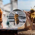 """""""ผึ้ง"""" ตัวน้อยกลายเป็น """"อินฟลูเอ็นเซอร์"""" บนอินสตาแกรม เพื่อรณรงค์ให้คนอนุรักษ์ผึ้ง"""