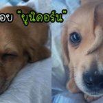 นุ้งหมาเกิดมาพร้อมหางที่ 2 ที่งอกขึ้นกลางหน้าผาก จนได้ฉายาว่า 'หมาน้อยยูนิคอร์น'