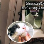 'แมวหลง' สะกดรอยตามหญิงแปลกหน้าจนถึงบ้าน และแอบส่องเธอที่หน้าต่างถึง 4 วัน!?