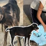 สุนัขถูกเชือกรัดคอแน่นจนฝังลงใต้ผิวหนัง โชคดีถูกช่วยไว้ทันเวลา และมีชีวิตใหม่ที่ดีกว่าเดิม
