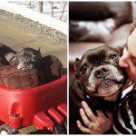คู่รักได้รับแรงบันดาลใจ จากหมาตัวโปรดที่ตายไป เริ่มต้นช่วยเหลือหมาจรแก่หาบ้าน