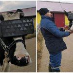 """นักทดลองจากรัสเซียทำ """"แว่น VR ให้เจ้าวัว"""" ใส่ หวังทำให้มันเครียดน้อยลง!!"""