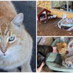 แมวจรจัดถูกรับเลี้ยงโดยเจ้าของร้านอาหาร กลายเป็นแมวกวักให้ร้านมาตลอด 10 ปี