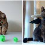นี่คือ 10 ไอเดียของใช้แมวๆ ที่สามารถทำเองที่บ้านได้จากเครื่อง 3D ปริ้นเตอร์