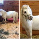 คู่หูห่านและม้าถูกช่วยมาจากฟาร์มด้วยกัน ห่วงกันและกันมากจนไม่ยอมแยกกันเลย