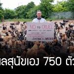 ชายใจดีเปิดศูนย์พักพิงให้สุนัขกว่า 750 ชีวิต เพื่อให้พวกมันไม่ต้องอดอยากข้างถนน