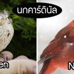 29 สัตว์ปีก 'วัยแรกเกิด VS โตเต็มวัย' ที่มีความแตกต่างกันอย่างสิ้นเชิง ราวกับคนละตัว