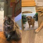 ศิลปินสาวสุดปลื้ม เมื่อเหล่า 'มะหมา' ถ่ายรูปกับ 'ภาพวาดตัวเอง' ที่เธอเป็นคนวาดให้