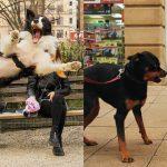 """ช่างภาพเผย """"ภาพสุนัข"""" ที่พบเห็นตามท้องถนนทั่วโลก โพสต์ท่าเก่งราวกับมืออาชีพ"""
