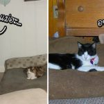 มาดูภาพของ 20 พี่หมา ผู้พ่ายแพ้ให้กับแมวในศึกชิงที่นอน จนต้องขอให้มนุษย์ช่วย