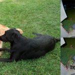 คู่รักหมารักกันหวานแหวว มีมาหาแฟนกลางดึกเพื่อเอาของขวัญให้ และชวนสวีทกัน