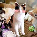 แม่แมวจรเห็นว่าหญิงใจดีมาตีสนิท และยินดีเปิดบ้านให้ เลยรีบพาลูกเข้ามาอยู่ด้วย