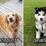 มาดู 20 ภาพน่ารักของหมาพันธุ์ผสม ความดูดีฉบับลูกครึ่ง ที่พ่อแม่ต่างสายพันธุ์ให้มา