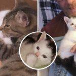 แม่แมวและลูกแมวขาเบี้ยว เจอหญิงใจดีช่วยดูแล ก่อนจะรับเลี้ยงพวกมันทั้งคู่