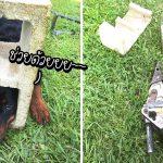 หมาน้อยซนมากไป มุดหัวเข้าไปติดอยู่ในบล็อกปูน นักดับเพลิงเลยต้องมาช่วยน้อง