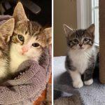 ลูกแมวสองพี่น้องถูกพบท่ามกลางหิมะ ได้รับการช่วยเหลือ และได้อยู่ในบ้านที่แสนอบอุ่น