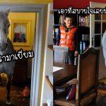 """เจ้าของบ้านตกใจเมื่อ """"ม้าแปลกหน้า"""" เดินเข้ามาในบ้าน แต่พวกเขาก็ต้อนรับมันอย่างเป็นมิตร"""