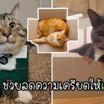 """นักวิจัยเผย """"แมว"""" พอใจกับการอยู่ใน """"กล่อง"""" เพราะมันช่วยลดระดับความเครียดได้"""