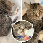 'ลูกแมวกำพร้า' ร้องไห้ไม่หยุด กระทั่งได้พบกับ 'คุณปู่แมว' ที่มอบอ้อมกอดแสนอบอุ่นให้