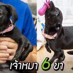 หมาน้อยเกิดมามี 6 ขา ได้พบกับครอบครัวที่พร้อมยอมรับ และรักในความพิเศษของมัน