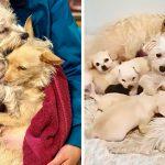 แม่หมา 2 ตัวช่วยกันดูแลลูกของอีกฝ่าย เหมือนว่าเป็นครอบครัวใหญ่ครอบครัวเดียว