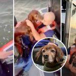 'สุนัขแก่' เลียหน้าผู้ช่วยเหลือเป็นการขอบคุณ หลังพวกเขาช่วยมันจากการจมน้ำทะเล