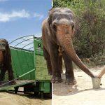 ช้างถูกขังนานเกือบ 53 ปี ได้รับการปลดปล่อย และกลับมาเจอเพื่อนๆ ที่ไม่เคยลืมมัน
