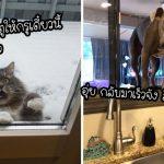 23 สัตว์เลี้ยงสายฮาที่มักมีพฤติกรรมแปลกๆ แถมยังซุ่มซ่ามอีก จะทำอะไรก็ดูตลกไปหมด