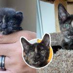 'ลูกแมวจิ๋ว' ถูกพบในสภาพร่อแร่ แต่ด้วยความรัก ความเอาใจใส่ มันจึงรอดมาได้ราวปาฏิหาริย์