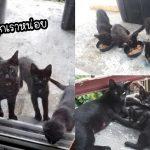 แม่แมวได้รับการช่วยเหลือจากคู่รักใจดี มันจึงพาลูกๆ มาหาพวกเขา เพื่อให้ช่วยหาบ้านให้