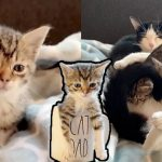 ลูกแมวผู้มี 'แววตากังวล' ได้รับการช่วยเหลือพร้อมครอบครัว จนมีชีวิตใหม่ราวกับแขกวีไอพี