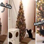 ทาสแก้ทางแมวชอบพังของ ใช้ต้นคริสมาสต์แบบผ้าใบมาแต่งบ้าน ทำเอาเจ้าแมวงง