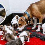 แม่หมาท้องแก่ถูกทิ้ง ก่อนมันคลอดเพียงไม่นาน แถมยังเป็นลูกครอกใหญ่ตั้ง 12 ตัว