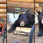 ครอบครัวตกใจมาก เมื่อพบว่าสิ่งที่ส่งเสียงดังอยู่ใต้บ้าน เป็นพี่หมีตัวใหญ่เบ้อเริ่มเทิ่ม!!