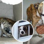 หมาตัวผอมหวาดกลัวคนหลังถูกนำมาทิ้งไว้ในกล่อง แต่ความรักก็ทำให้มันเปลี่ยนไป