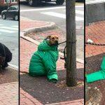 หญิงเอาเสื้อแจ็คเก็ตของตัวเองให้เจ้าหมา มันจะได้ไม่รู้สึกหนาวระหว่างรอเธอ