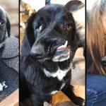 หมาลาบราดอร์เกิดมา มีหน้าตาบิดเบี้ยวจนคนเห็นต้องผงะ กำลังมองหาคนที่จะรักมัน