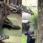 """เจ้าหมาถูกถอดจากการฝึกเป็น """"หมานำทาง"""" เพราะมันห้ามใจไม่ให้ไล่กระรอกไม่ได้"""