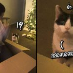 แมวทำหน้าเหวอแรงมาก เมื่อเห็นทาสแย่งนั่งในกล่องใบโต ซึ่งควรจะเป็นที่ของมัน