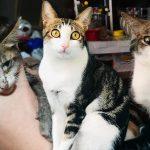 คู่รักช่วยเก็บลูกแมวจรจัด หน้าตามอมแมมมาดูแล จนมันเปลี่ยนมาดูดีแทบจำไม่ได้