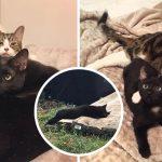 หญิงช่วยให้แมวดำตัวน้อยรอดตายหวุดหวิด และช่วยส่งมันไปเจอครอบครัวในฝัน