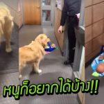 น้องหมาตำรวจนิสัยไม่ดี แอบขโมยตุ๊กตาคริสต์มาสของเด็กๆ แม้ถูกจับได้ก็ไม่แคร์