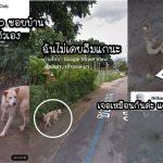 ชาวเน็ตร่วมแชร์รูปสุนัขตัวเองที่ถ่ายโดย 'Google Street View' พร้อมเรื่องราวเบื้องหลังภาพ