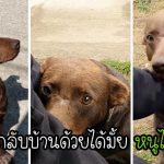 สุนัขจรจัดผู้เป็นมิตรนั่งที่เดิมทุกวัน เพื่อรอใครสักคนมาช่วยเหลือและมอบบ้านแสนอบอุ่นให้