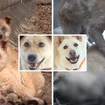สุดเศร้า…'ลูกหมาถูกทิ้ง' นำทางผู้ช่วยเหลือไปหาน้องสาวของมัน ที่เหลือแค่ร่างไร้วิญญาณ