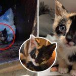 """คนเก็บขยะช่วย """"ลูกแมวสามสี"""" ที่ถูกทิ้งในถังขยะ ทำให้มันได้รับชีวิตใหม่ราวกับเจ้าหญิง"""